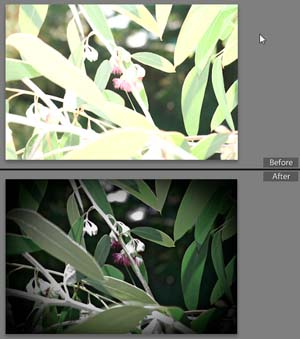 how to make lightroom preview faster